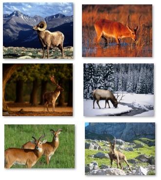 دانلود تصاویر حیوانات برای پس زمینه سری 1