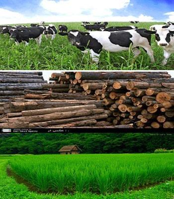 حسابداری فعالیت های کشاورزی
