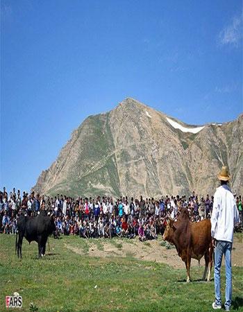 دانلود کلیپ مبارزه گاوهای نر(جونکا سره)