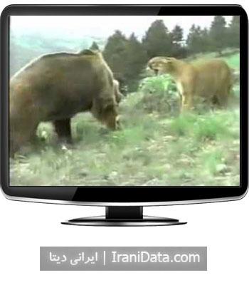 دانلود کلیپ دیدنی جدال شیر و خرس